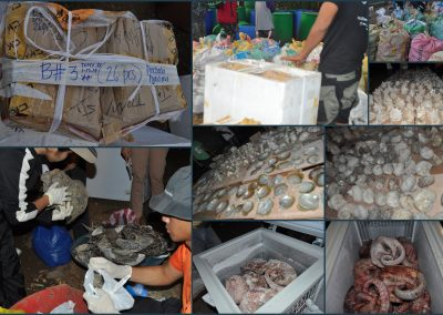 ILLEGAL TRADERS OF ENDANGERED WILDLIFE, CAUGHT