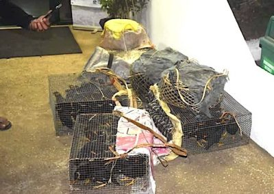 Over 100 Palawan mynas seized from poacher