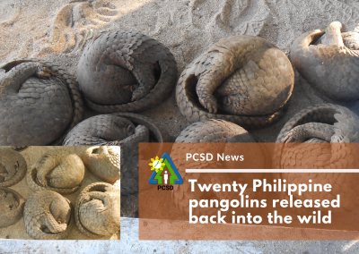 Twenty Philippine pangolins released back into the wild