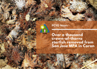 Over a thousand crown-of-thorns starfish removed from San Jose MPA in Coron