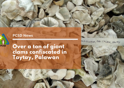 Over a ton of giant clams confiscated in Taytay, Palawan