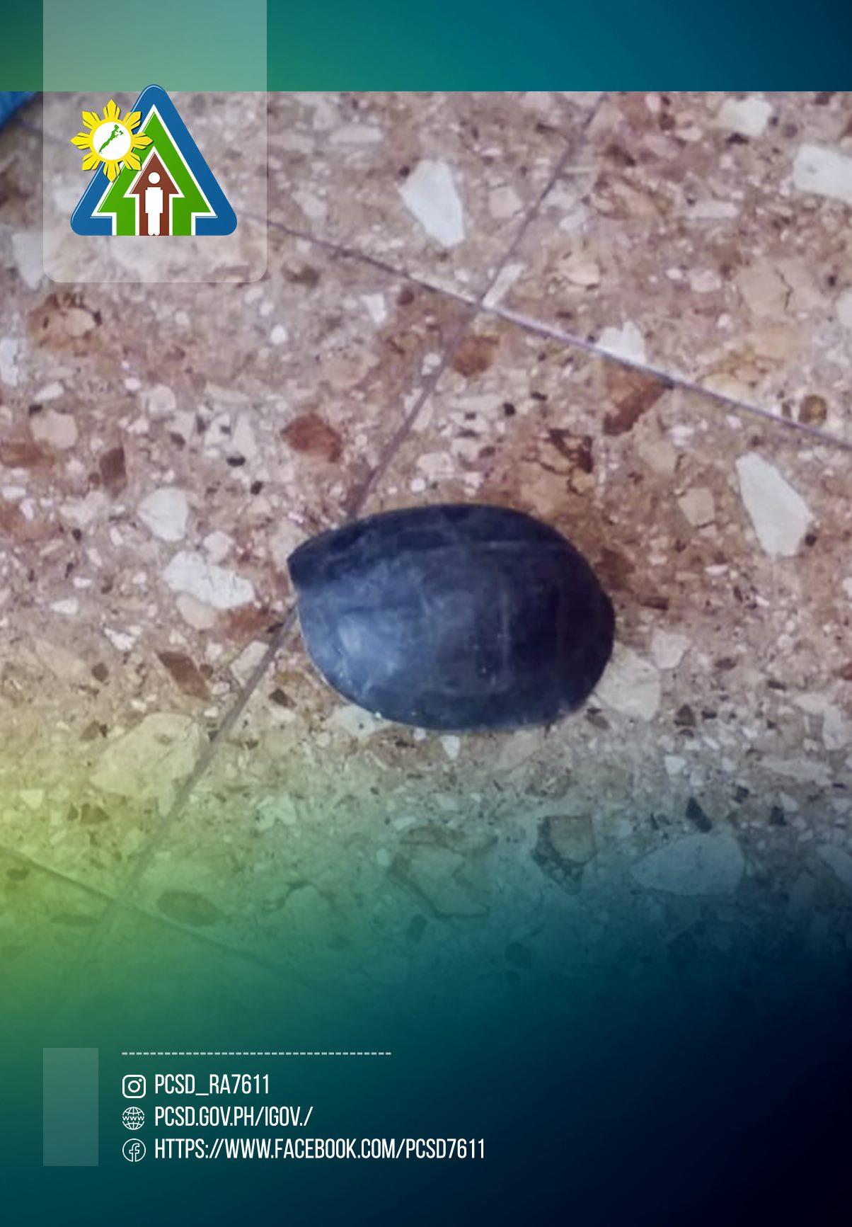 Southeast Asian Box Turtle