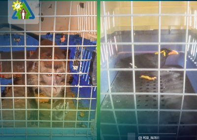 ONE PHILIPPINE LONG-TAILED MACAQUE AND ONE PALAWAN HILL MYNAH RESCUED AND TURNED OVER TO PCSDS