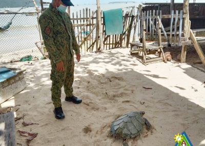 One Female Hawksbill Turtle Rescued and Turned Over to PCSDS