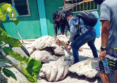 FOSSILIZED GIANT CLAM SHELLS SEIZED IN GREEN ISLAND, ROXAS, PALAWAN