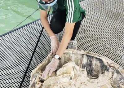Putrefied Green Sea Turtle recovered in Cowrie Island, Barangay Sta. Lourdes, Puerto Princesa City