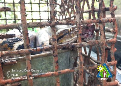 One Reticulated Python retrieved in Barangay San Manuel, Puerto Princesa City